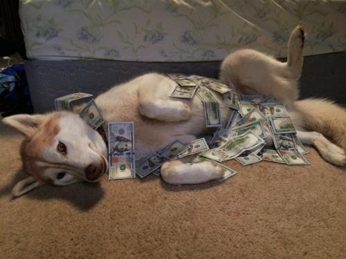 Cost of Shiba Inu